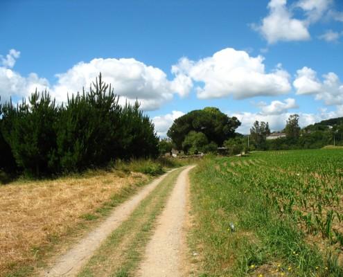 Cammino di Santiago 389 (2)