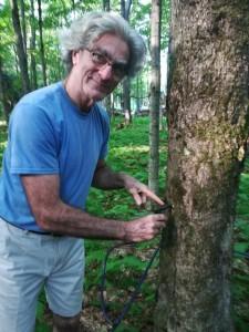 """Alcuni degli alberi di acero sono dotati di un sistema che consente la fuoriuscita tramite un rubinetto del caratteristico succo di """"erable"""""""